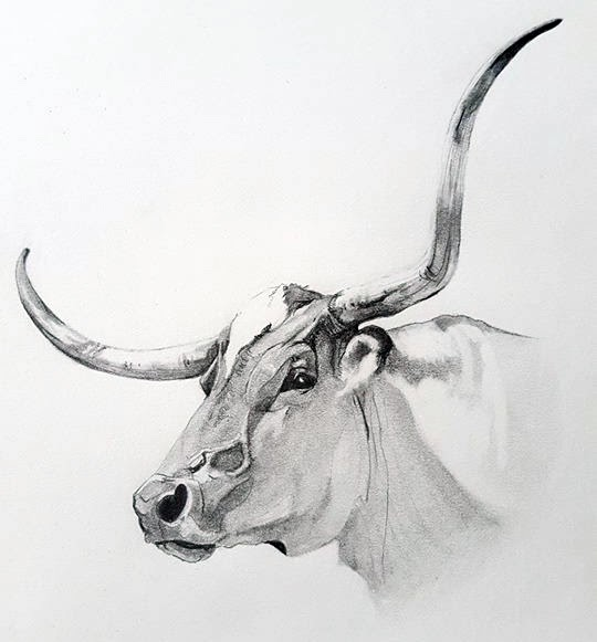 A drawing of a cow with large horns